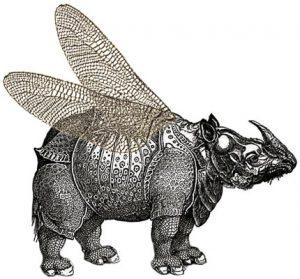 rhinocéros ailé