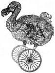 dodo à roulettes